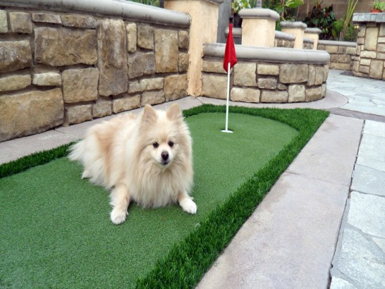 Artificial Grass Photos: Artificial Turf Cost Santa Clarita, California Dog Hospital, Backyard Landscaping