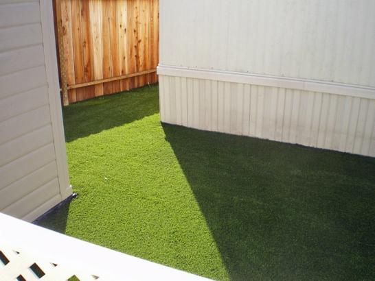 Artificial Grass Photos: Outdoor Carpet Duarte, California Dog Running, Backyard Ideas